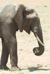 Elefante - lato - verticale 2