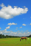 Grazing Horse in Beautiful Pasture poster