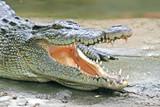 Crocodile Jaws poster