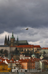 Prague seagull