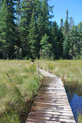 Wooden walkway leading to a forest trail