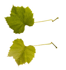 wine. one leaf - two sides