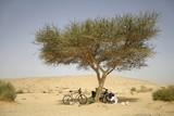 cyclists under tree,  in sede boker desert, israel poster