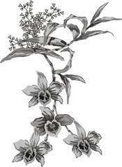 grey orchid illustration