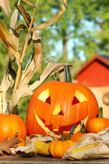 Autumn harvest with scarved pumpkin