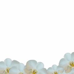 Fondo orquídeas sencillo