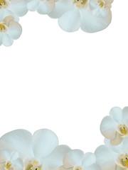 Fondo orquídeas doble