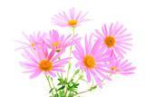 Bouquet of magenta gerbera daisies poster