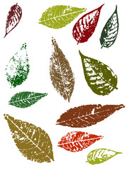 Grunge Autumn Leaves