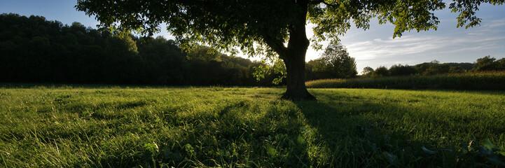 ombre et herbe