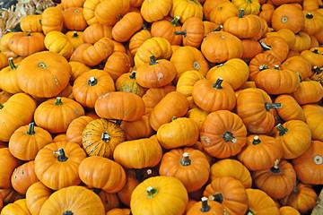 Pumpkins 01R1