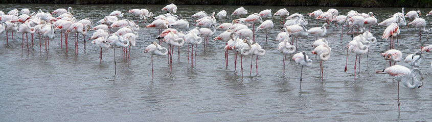 Groupe de flamands roses