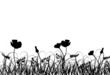 Grass and poppy, vector - 4477892