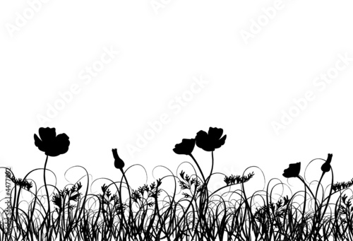 canvas print picture Grass and poppy, vector