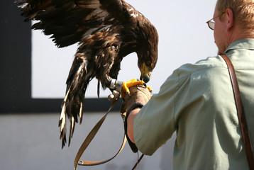 eagle 36