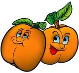 Apricots - cartoon illustration poster