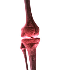 Knee Bone Pain