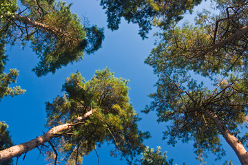 converging trees