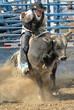 Rider & Bull