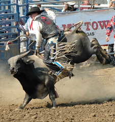 Bull & Cowboy