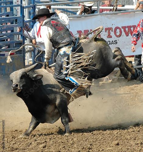 Staande foto Stierenvechten Bull & Cowboy