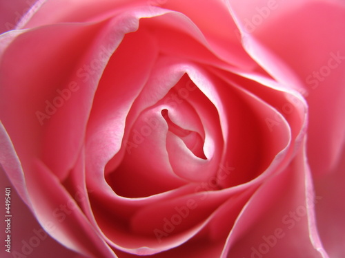 Fototapeta rosenblüte 3