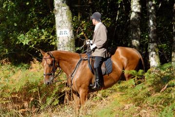 cavalier de chasse à courre en sortie de bois