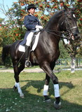 equestrian woman on black horse 2 poster