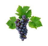 Fototapety Blue grape cluster with leaves