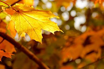 Autumn Background 2