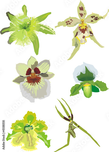 green orchid collection
