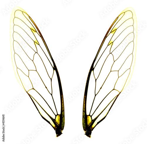 Staande foto Textures two cicada wings