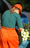Female shopping at a local produce stand. poster