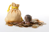 Little mouse sitting on a heap of coins poster