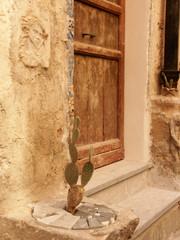 Cactus & angioletto