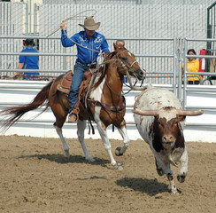 Cowboy Roping a Bull