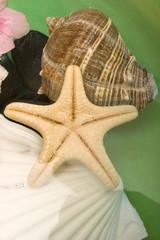 Variety of seashells in water