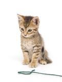 Tabby kitten and yarn poster