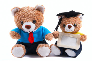 office, graduate teddy bear