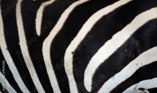 Zebra Muster 2