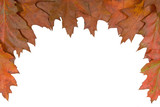 Autumn leaf top frame ideal as border poster