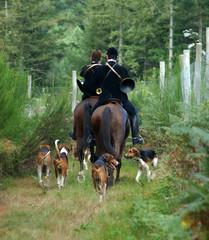 cavaliers et chiens  de chasse à courre en forêt