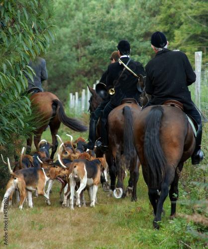 Papiers peints Chasse meute de chiens et cavaliers