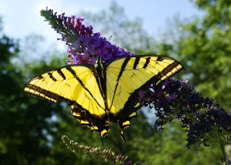 Monarch B 7-07