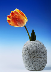 Tulip In Granite