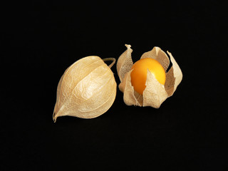 Matured Physalis Fruit