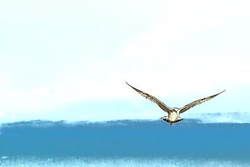 Gaviota sobre el Mar