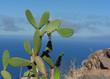 Gomera - Kaktus