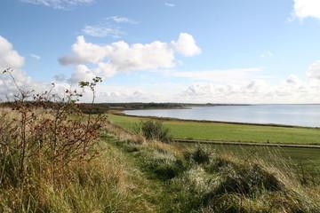 Herbstliche Szenerie am Limfjord in Dänemark