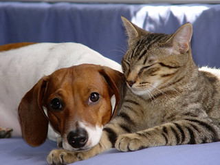 snuggle time-rb
